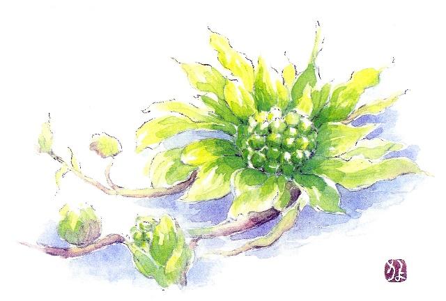 《本art-kayo网站花卉,水果,风景水彩画》- 1-一枕-我