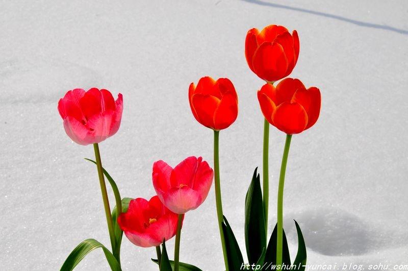 最美的春天寄语