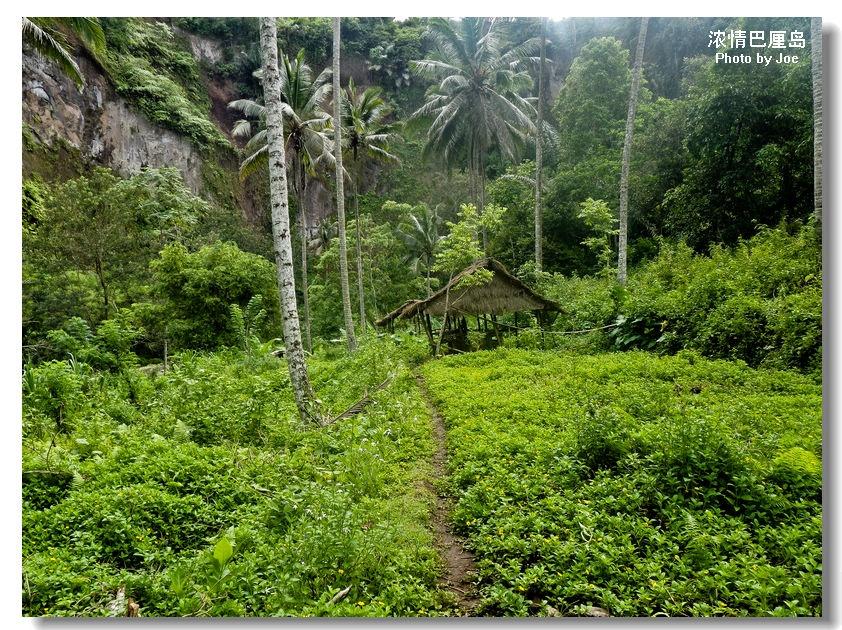 乌布附近的阿勇河(AYUNG)长约11公里,AYUNG在印尼语里是美丽姑娘的意思。阿勇河激流在山峦起伏、险峻的河谷中,两岸可见陡峭河谷、天然瀑布及枝叶浓密的热带雨林,也有梯田、椰林、小径、人家及豪华酒店散落其中。 阿勇河上的漂流公司有好几家,从客人身上穿的救生衣、头盔、皮阀的颜色就可以看出不同。一架橡皮艇上共四名游客,一名教练兼掌舵人。这项活动既考验您自己的体力,还有团队合作的精神。橡皮艇随着水流而下,时而激流奋进,时而倾斜旋转,时而又缓缓而行,教练还会用不太熟练的汉语发出前、后、停、趴下等命令, 团结