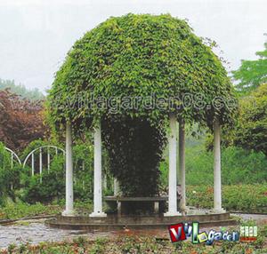 欧式庭园的风格            小庭院设计要点
