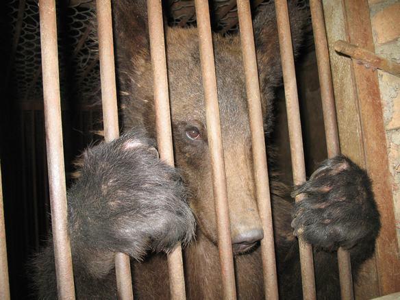 八达岭野生动物园-风雨中的美丽-搜狐