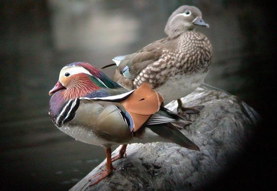 鸬鹚:乌鬼, 沸波,沸河,鱼鹰, 雕鸡 , 鷧   鹭:风标公子, 白鹤子, 丝