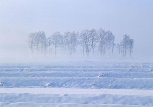 从北京再次回到大庆,有种久违的情切感,也许这里才是属于自己的广阔天地! 去得时候,烈日炎炎,姹紫嫣红 回来的时候,寒风刺骨,冰天雪地 火车在向前飞奔,犹如一条洁白的长蛇在蓝天白云间飞舞,轻盈洒脱地带着乘客迅速向目标接近。车内的空调似乎有点力不从心,温度计上的数字每隔几分钟下降一度。列车两旁一排排干枝枯木几天前也曾妩媚,而今孤独地立在广阔的平原上画一般迅速向后移动,仿佛是蜃景里的湍流,白色浪花翻卷沉落,浑然有声向远方呼啸而去 北京的冬天也是冬天,虽然也比较冷,但冷的虚伪,人们轻而易举就可以草草应付过去,就