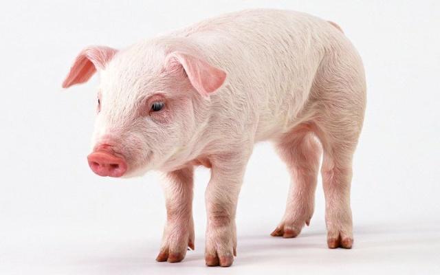 世界上最聪明的动物_盘点世界十种最聪明的动物