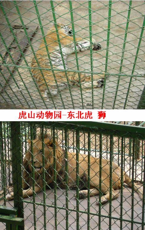 虎山动物园-泰山旅游参谋-搜狐博客