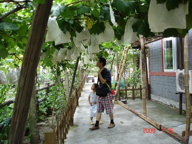 农家小院葡萄架设计分享展示
