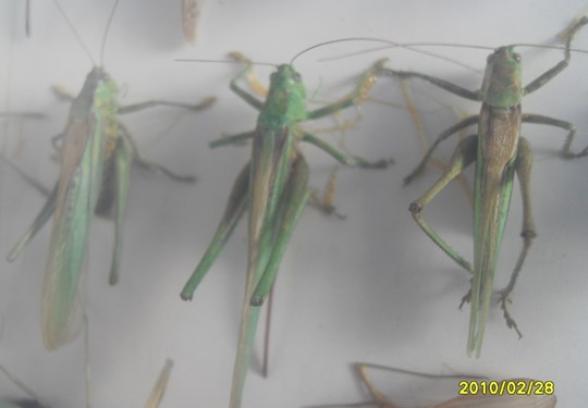 我是怎样采集制作昆虫标本的