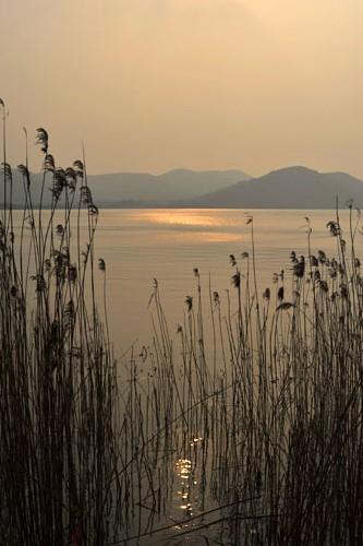 初春的太湖湖滨,腊梅已经盛开,湖边的夕阳下,微风还有一丝寒意,只是荡