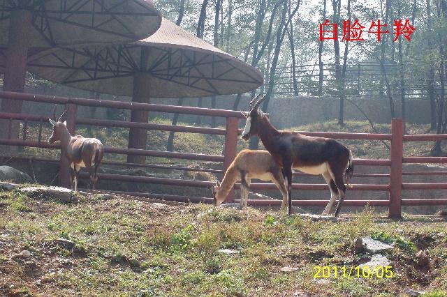 济南野生动物园图片