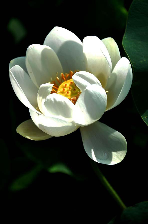 牡丹花瓣碎片素材