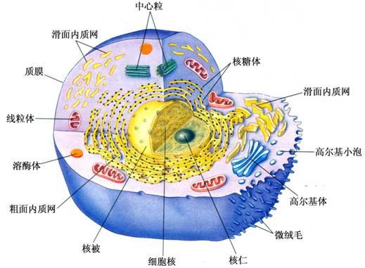 或相似的一些细胞及其周围的细胞间质一起构成组织
