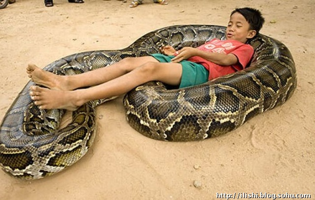 柬埔寨男孩与他的巨蟒朋友