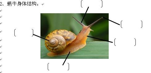 三年级金鱼身体结构图