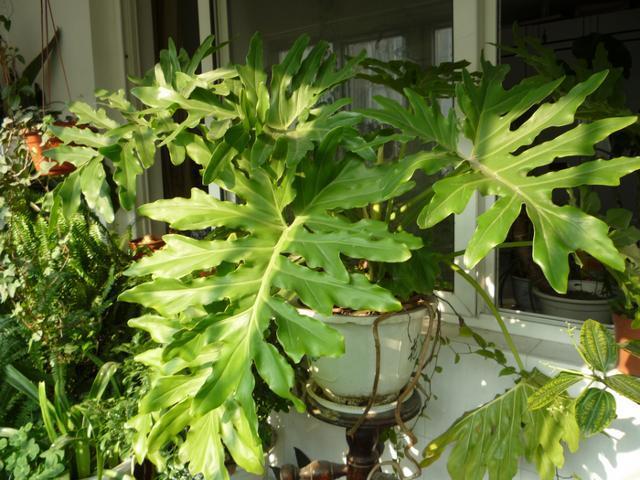 今天阳台植物的长势