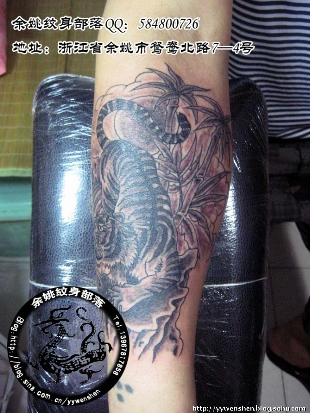 顾客原先小臂有个以前自己针扎的失败纹身,找了个老虎遮盖,本来是彩色
