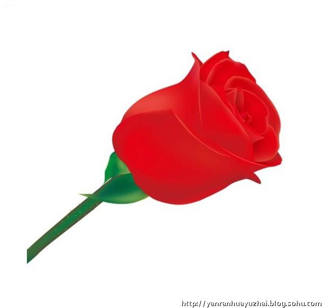 交响乐送我一枝玫瑰花,一枝玫瑰花图,一枝玫瑰花的图片,你送我一